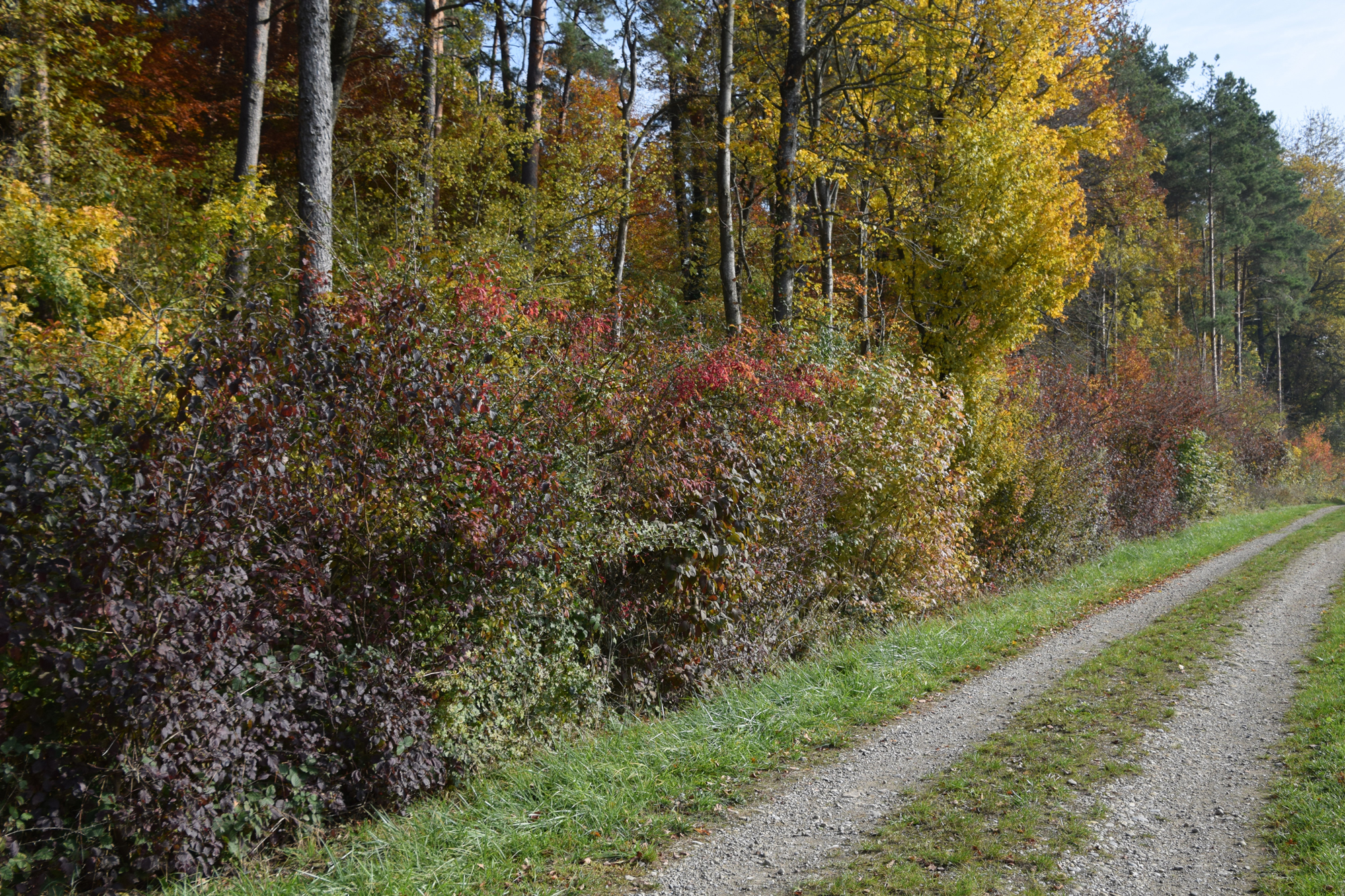 Waldrand Herbst